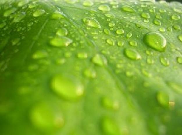 water-op-het-blad_2336861