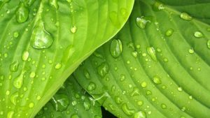 https---fotos.websitesvoortherapeuten.com-wp-content-uploads-2016-01-661-Bladeren-water-groen-1920-Fotos-voor-Therapeuten-1560x878
